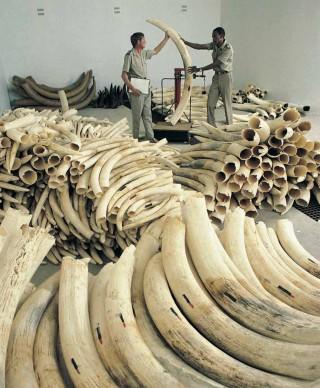 2014-Rapporto-sui-crimini-ambientali_22